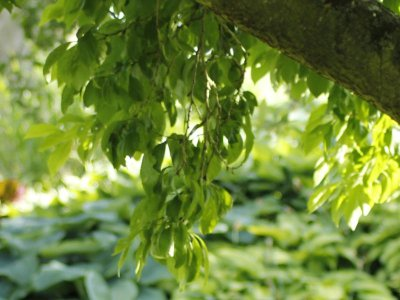 Lav en klimavenlig skovhave